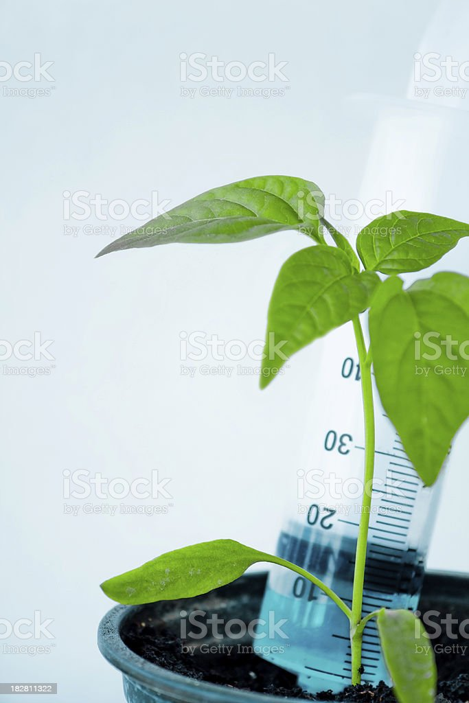 Genetically Modified plant stock photo