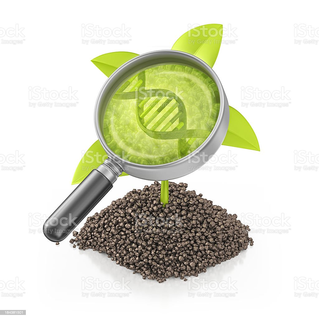 genetically modified plant royalty-free stock photo
