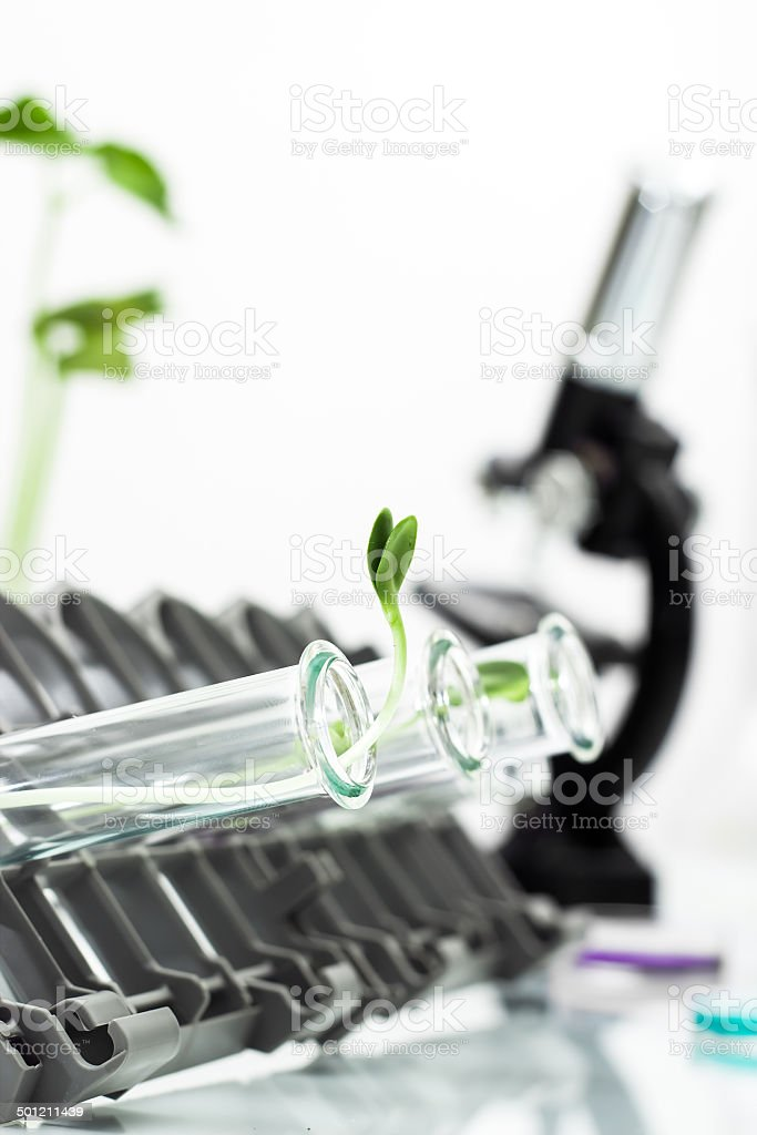 Genetically modified plant tested in test tube . stock photo