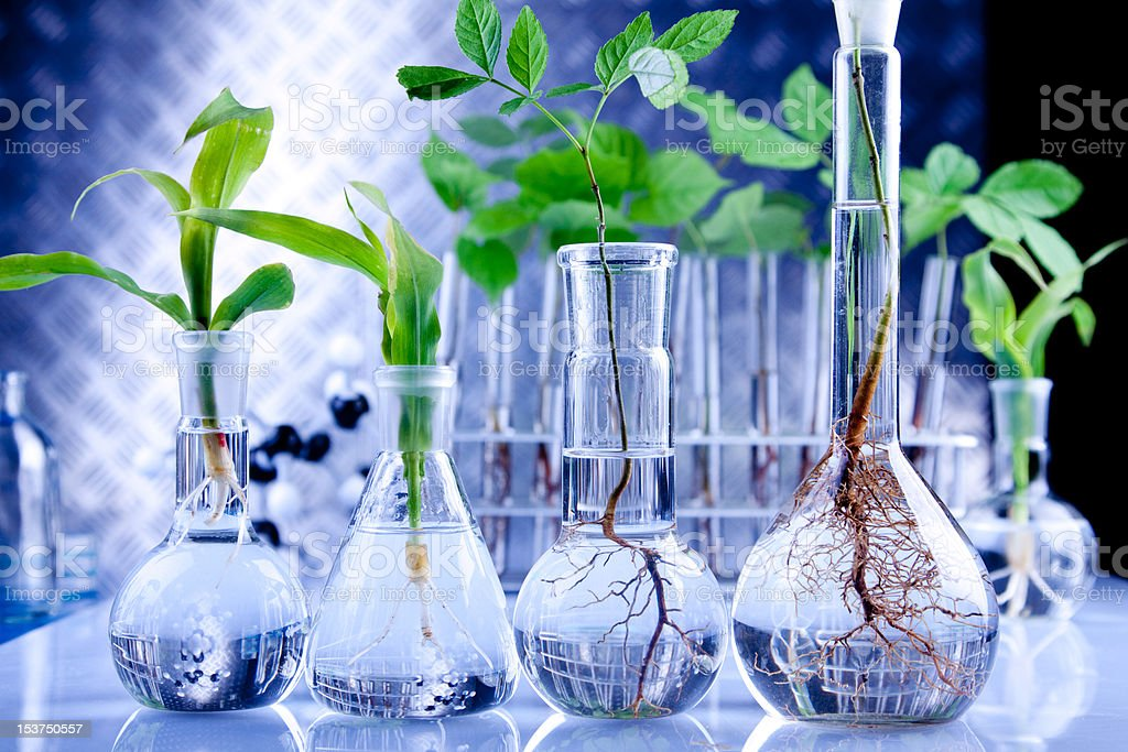 Genetically modified plants royalty-free stock photo