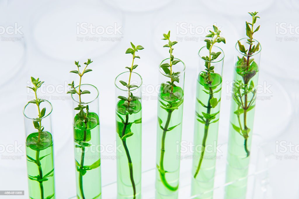 Genetically modified plants stock photo