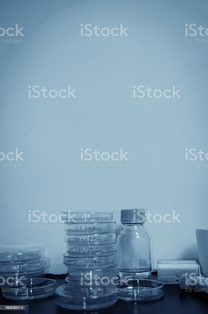 genetically modified plants test royalty-free stock photo