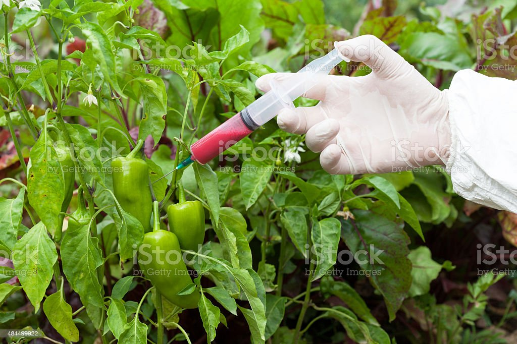 Genetically modified vegetable stock photo