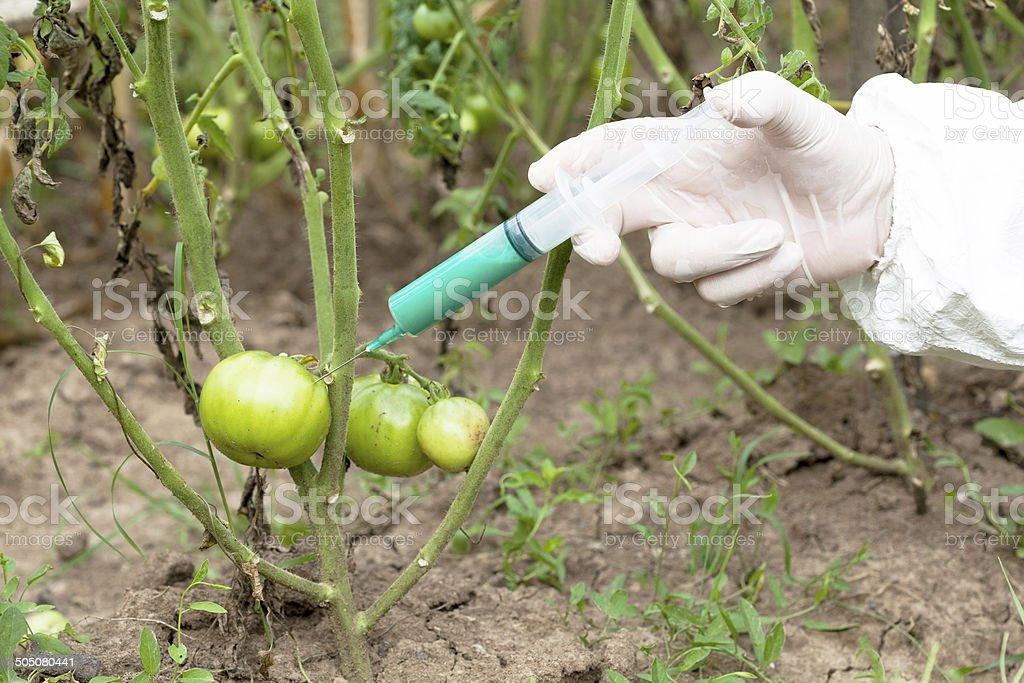 Genetically modified vegetable stock photo