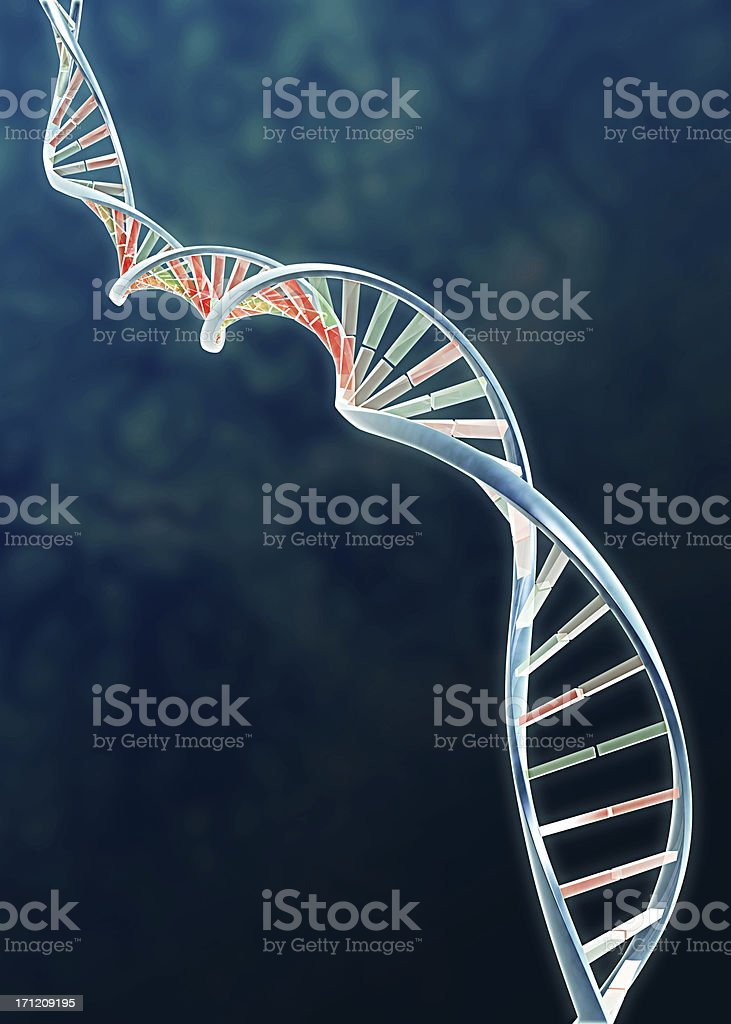 Genome - DNA double helix royalty-free stock photo