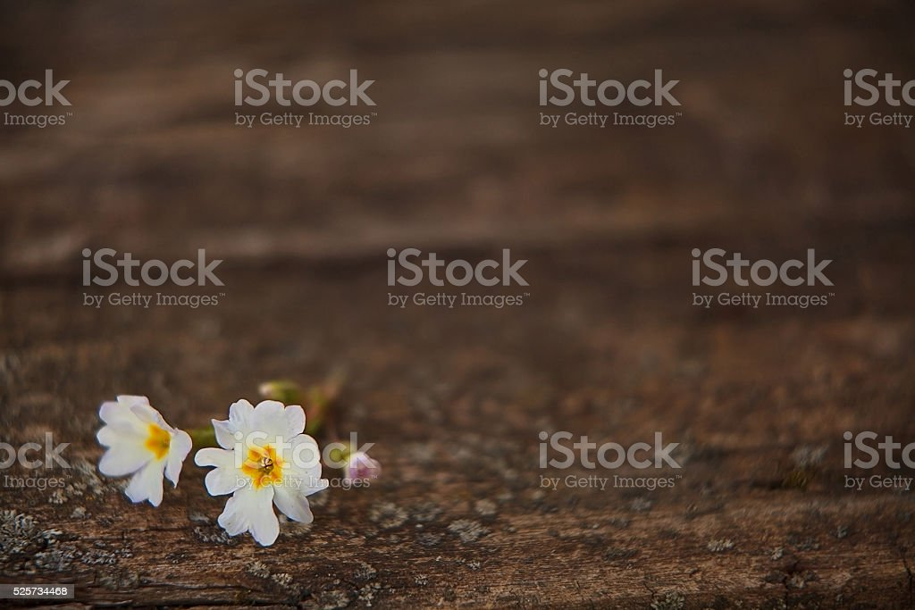 gentle background in vintage style stock photo