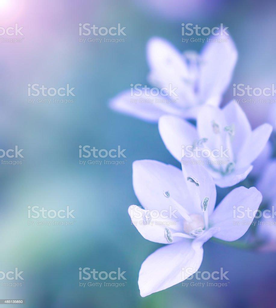 Gentle white flowers stock photo