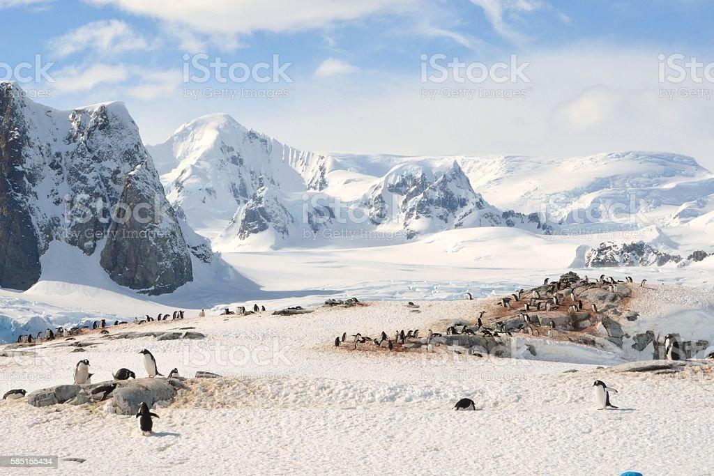 Gentoo Penguin Colony on Petermann Is. stock photo