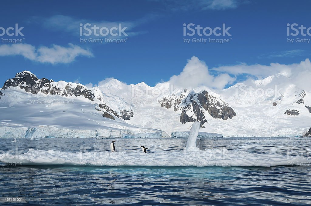 Gentoo penguins perched on an iceberg in Antarctica stock photo