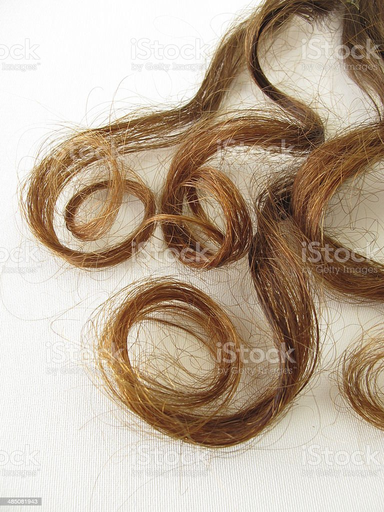 Genuine chestnut-brown hair curls royalty-free stock photo