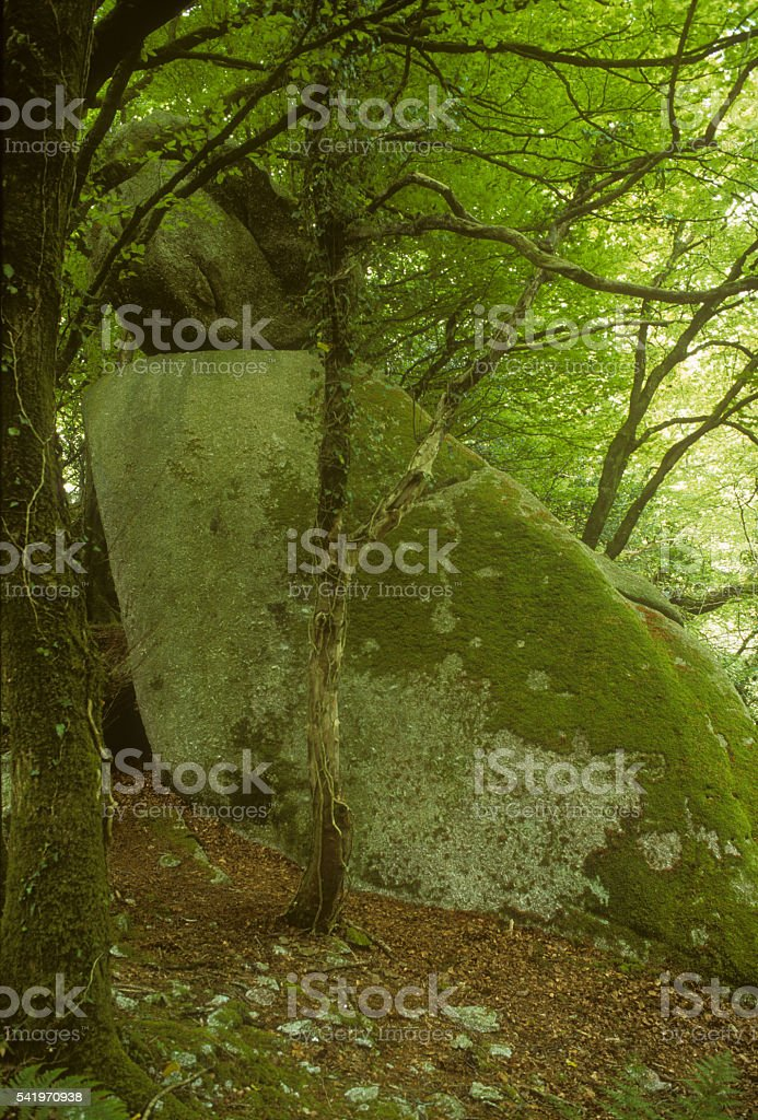 Geological Feature Luxulyan Valley stock photo