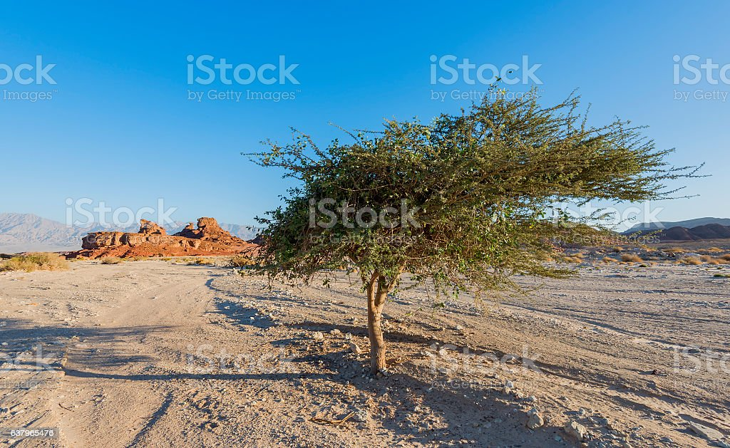 Geological nature park Timna stock photo