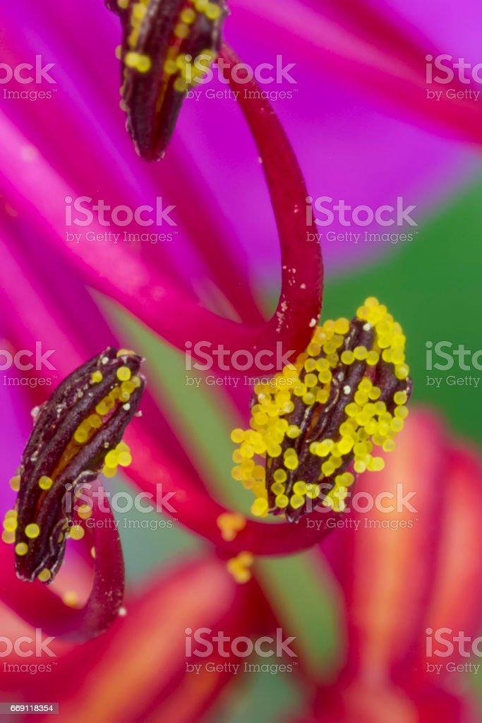 geranium stamens stock photo
