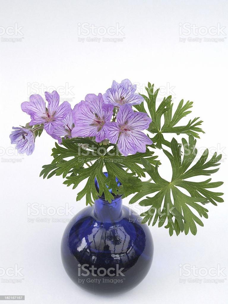 Geranium tuberosum royalty-free stock photo