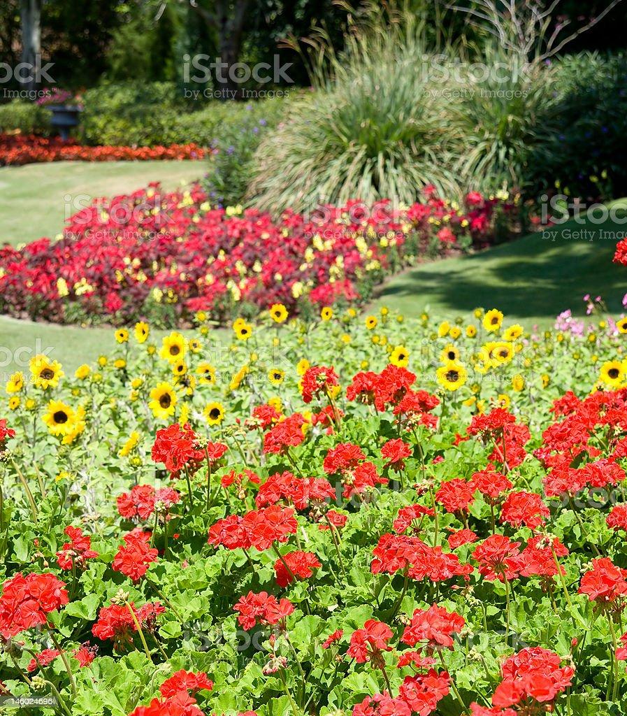 Geraniums in Formal Garden royalty-free stock photo