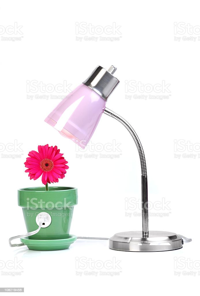 Gerber Daisy and Lamp Clean Energy Concept on White royalty-free stock photo
