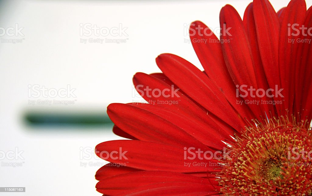 gerber daisy and lounge chair slats royalty-free stock photo