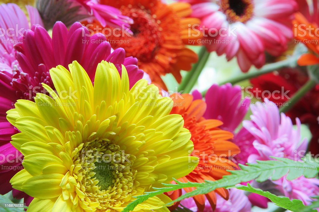 Gerbera Daisy Flower Arrangement royalty-free stock photo