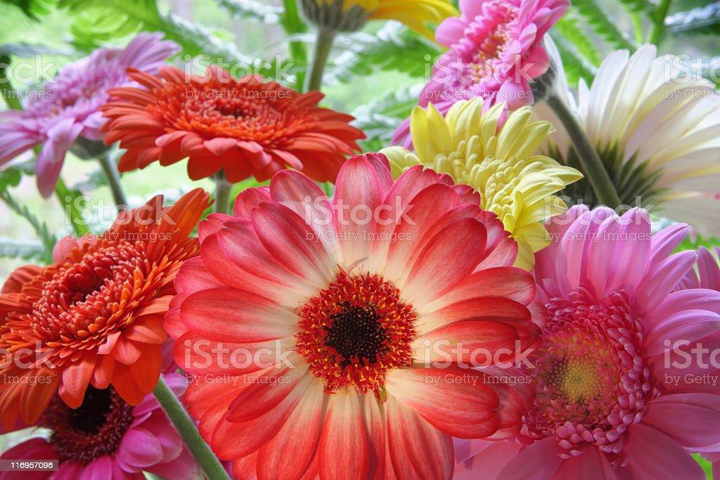 Gerbera Daisy Garden Flower Bouquet royalty-free stock photo