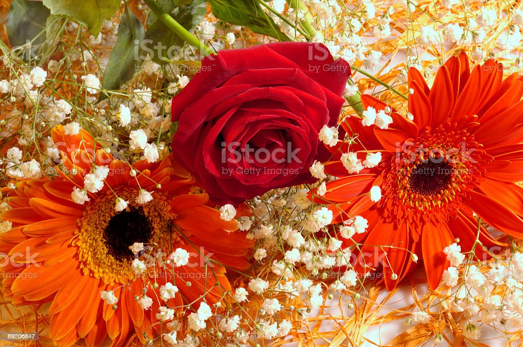 Gerbera Deisys and Rose royalty-free stock photo