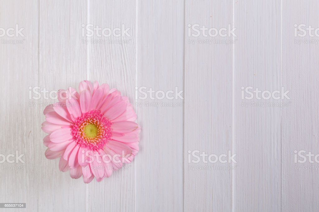 Gerbera flower on wooden board. Love design. stock photo