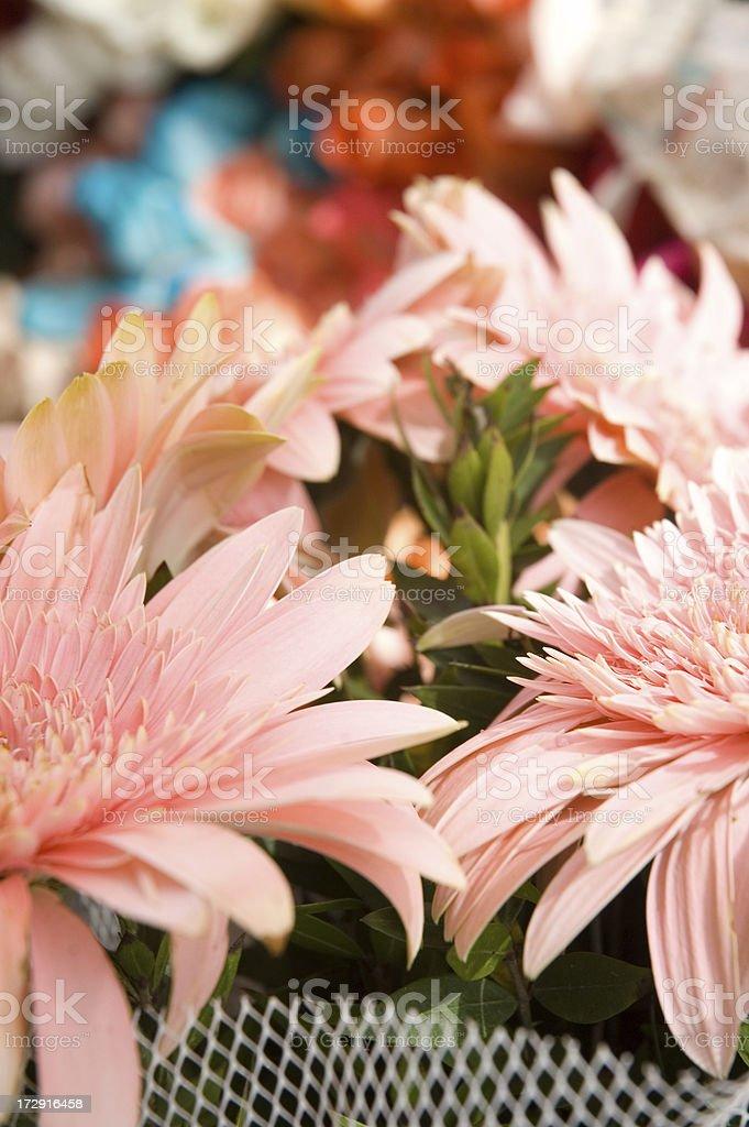 gerbera flowers stock photo