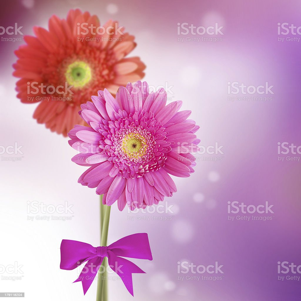 Gerbera flowers royalty-free stock photo