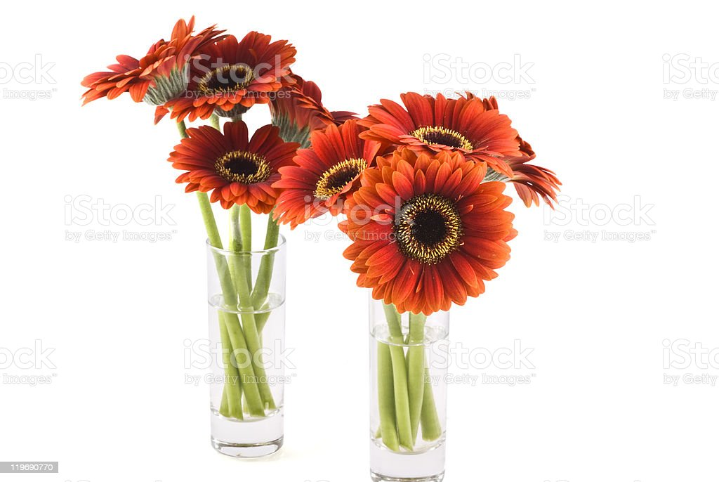 Gerbera. stock photo