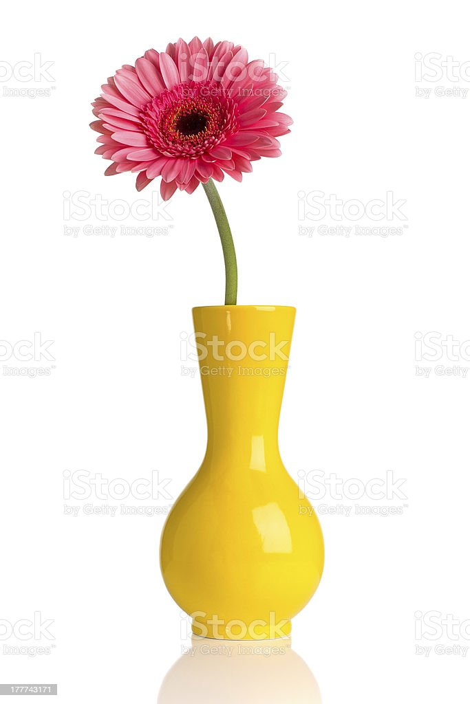 Gerbera. royalty-free stock photo