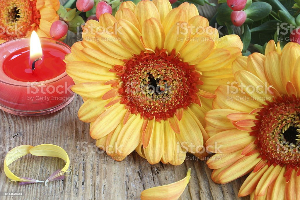 Gerbera with candles stock photo