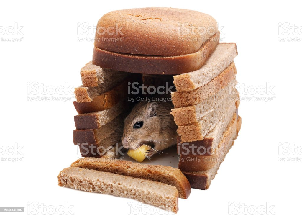 Gerbil Mouse Mat Cheese in House of Bread Pieces Isolated stock photo