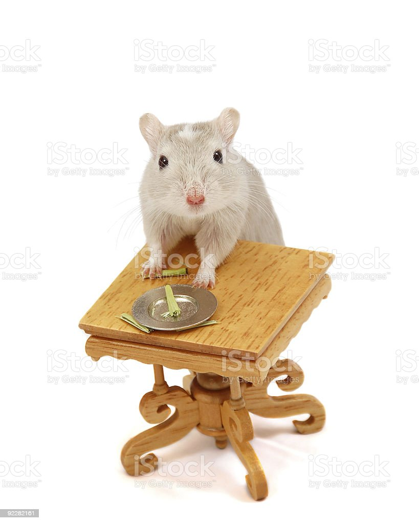 Gerbil standing at table stock photo