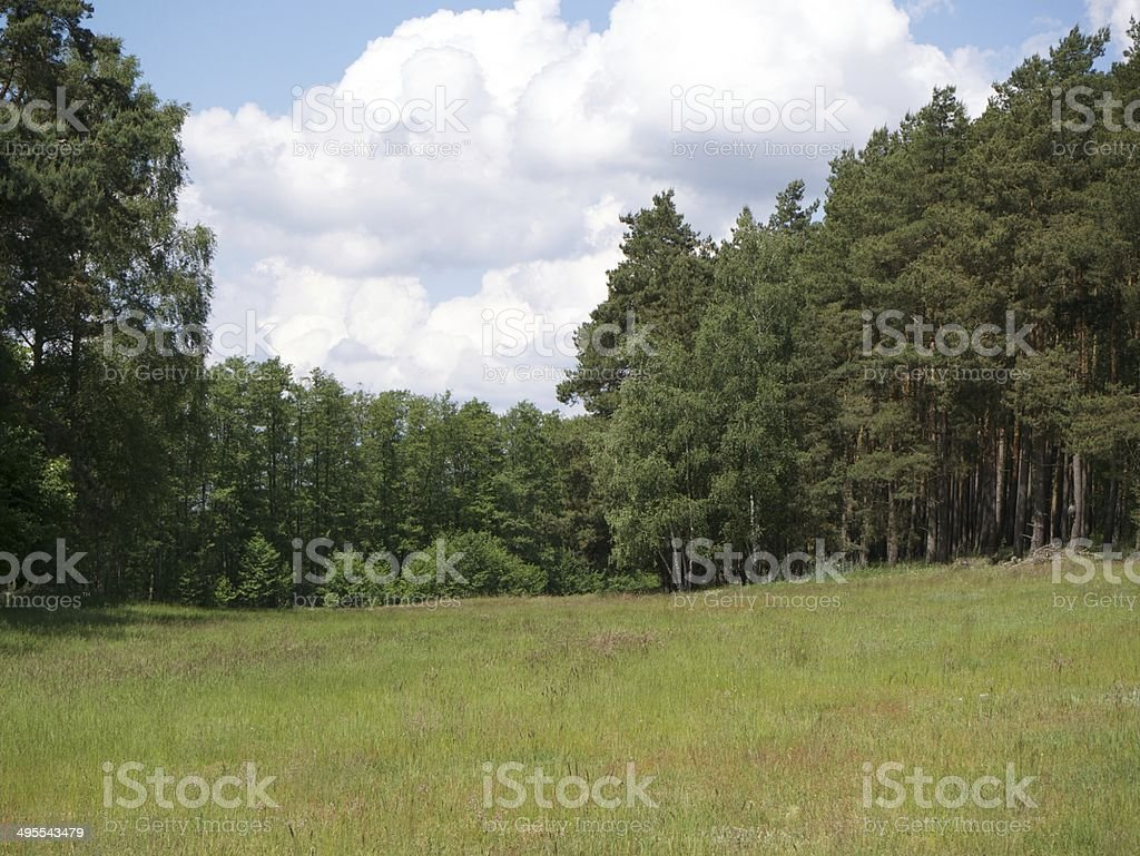 german forest stock photo