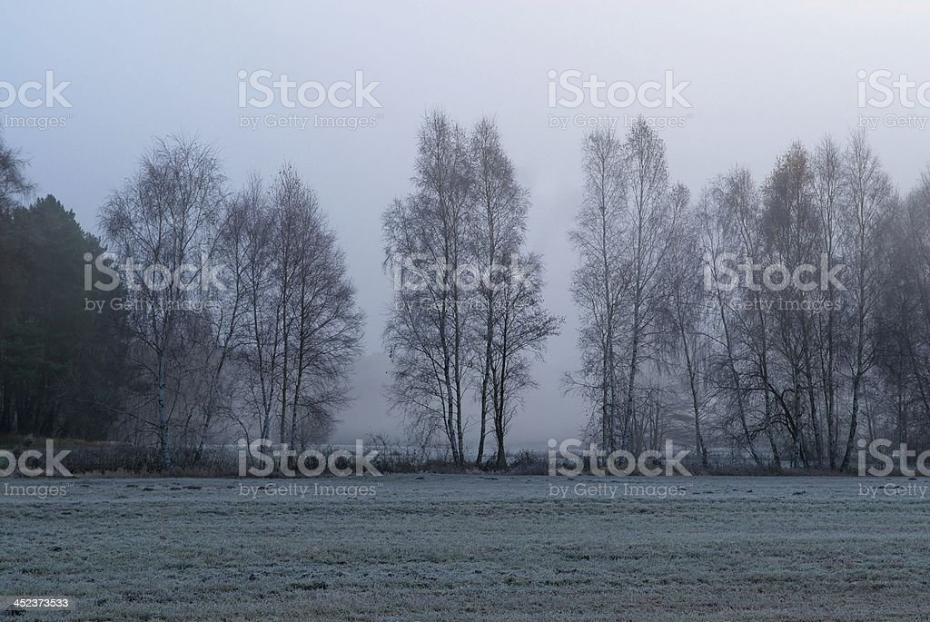 german forest sadness royalty-free stock photo