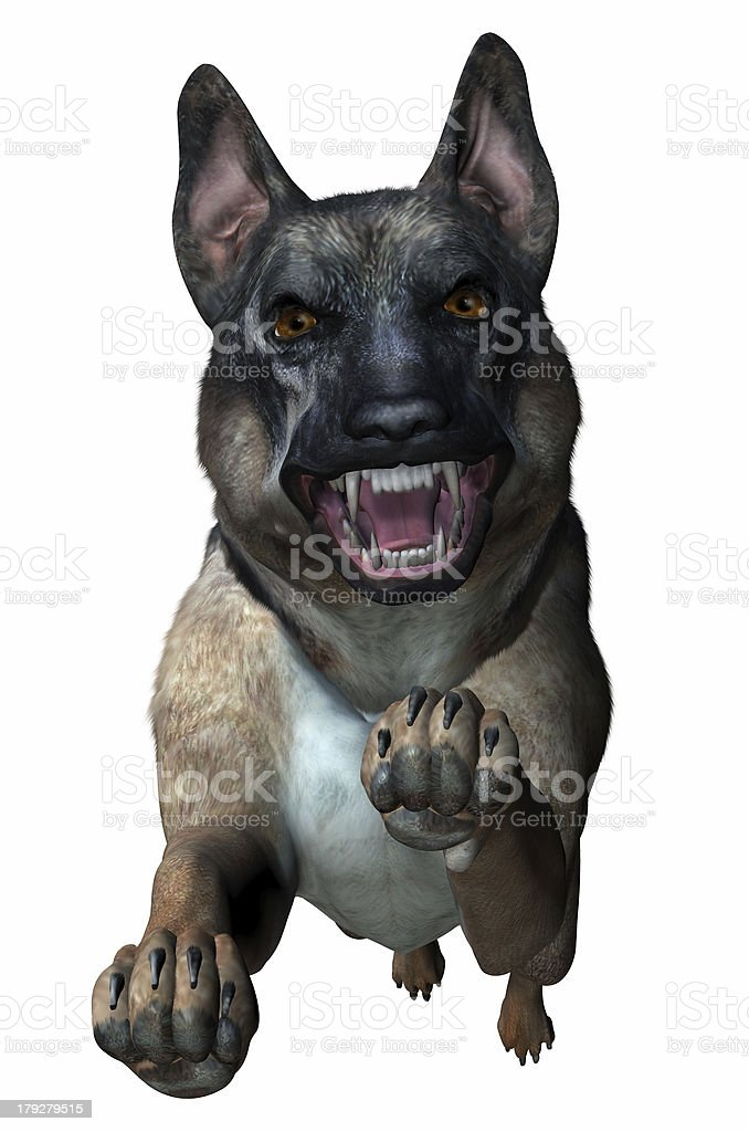 German Shepherd Attacks - includes clipping path royalty-free stock photo