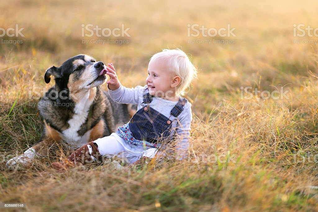 German Shepherd Dog Licking the Hand of His Baby Girl stock photo