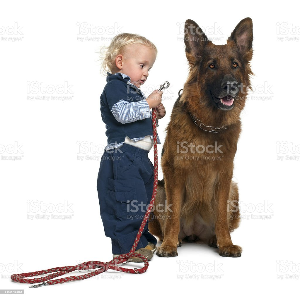 German shepherd dog with boy attaching leash royalty-free stock photo