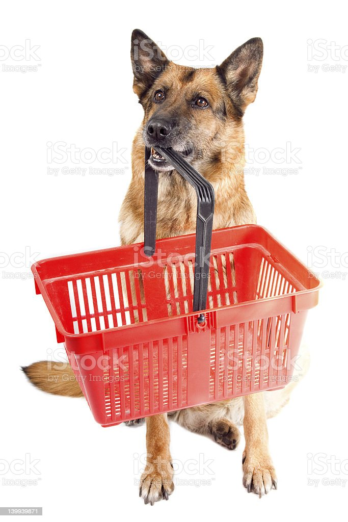 German shepherd holding a red basket in it's mouth stock photo