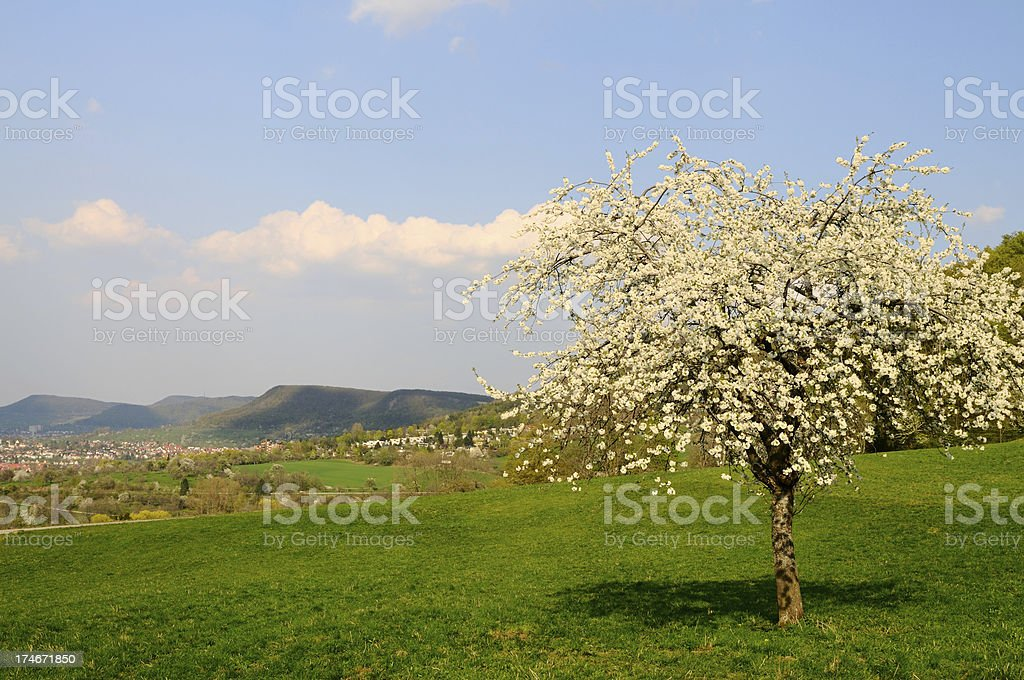 German Spring in Swabian Mountains Apple Tree stock photo