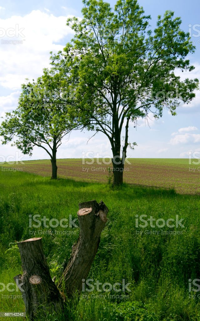 Germany: Overgrown stream beside a freshly sown field in Eastern Thuringia stock photo