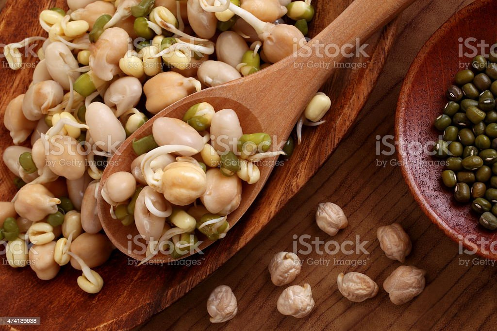Germinated beans stock photo