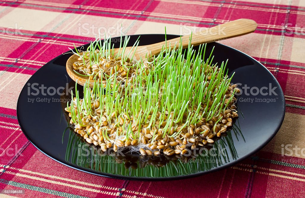 Germinated grain stock photo