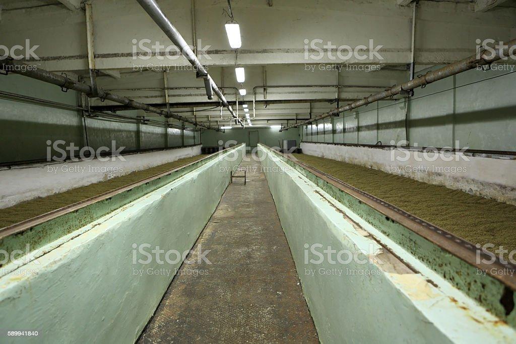 Germinating malt on brewery stock photo