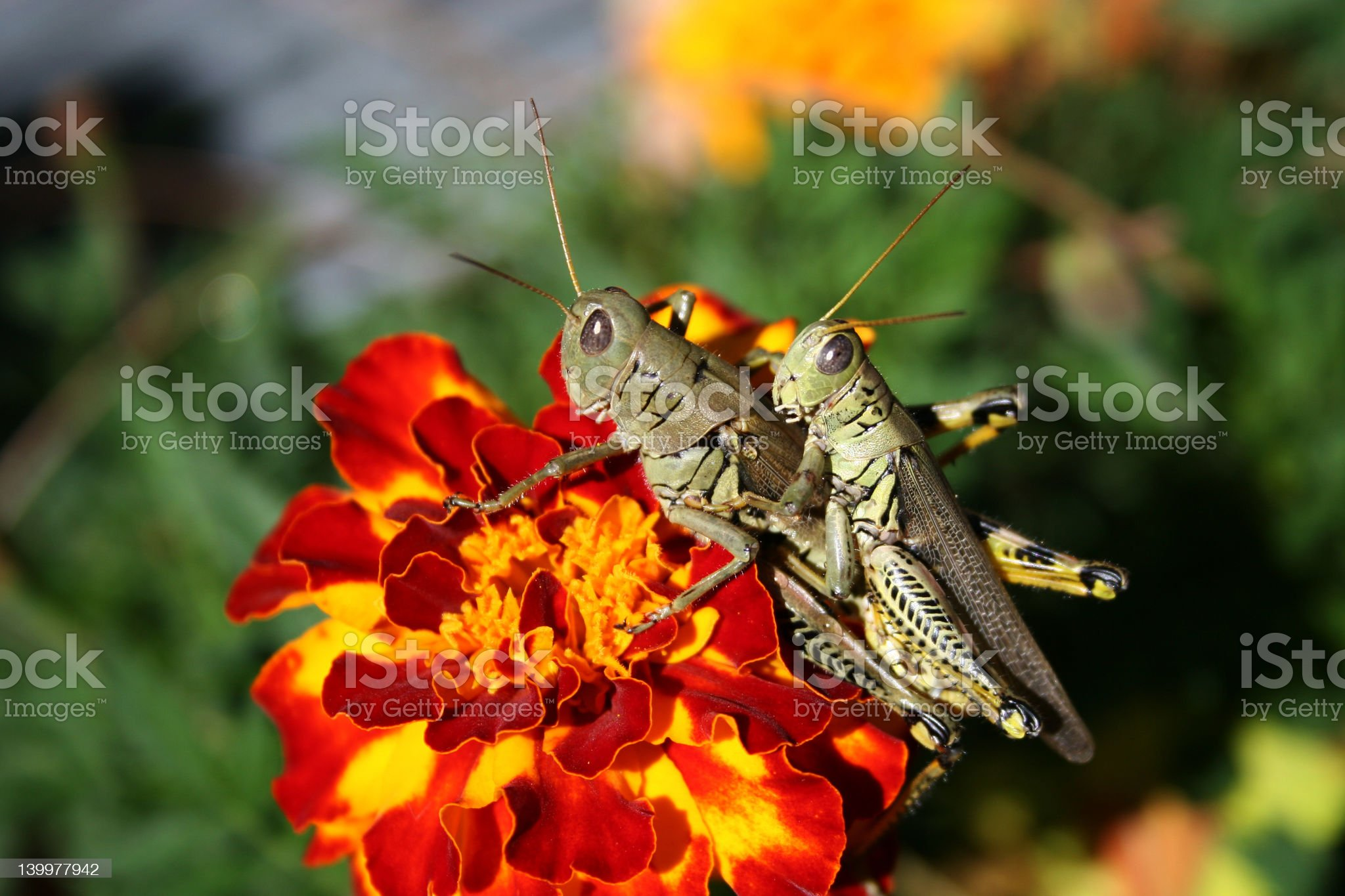 Get off my back! royalty-free stock photo