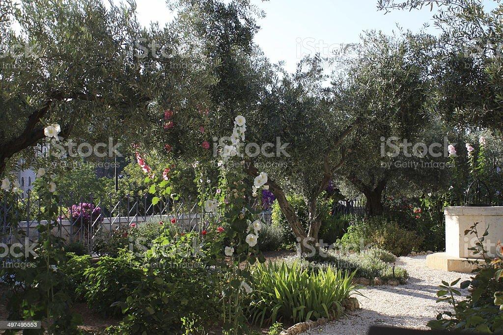 Gethsemane Garden in Jerusalem stock photo