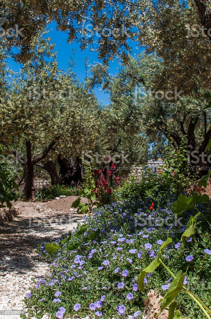 Gethsemane stock photo