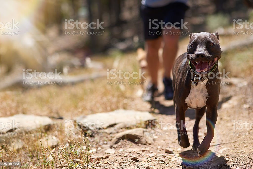 Getting his daily exercise stock photo