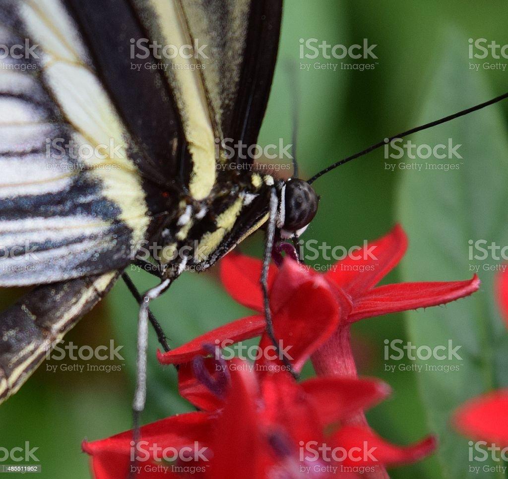Getting nectar stock photo