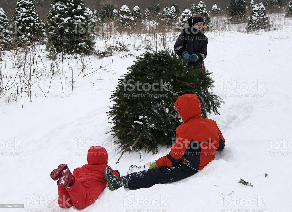 Getting the Christmas Tree- series stock photo