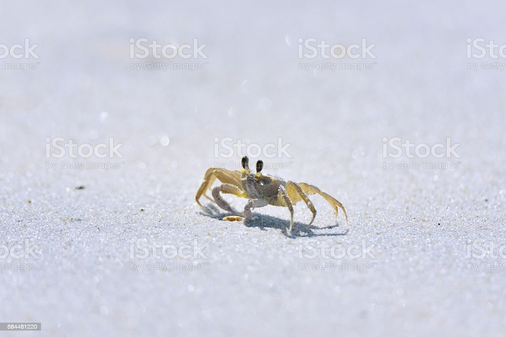 Ghost Crab Attack stock photo
